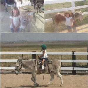 Longhopes_Donkey_Shelter